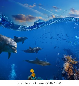 Oceanview. A flock of playful dolphins swimming underwater over coral reef background hunting to fish