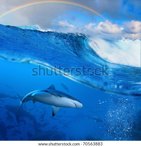 Ocean-view splitted two parts First with few sharks in blue underwater Second with sunlight and cloudy sky and rainbow seascape splashed breaking surfing wave