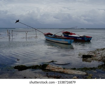 Ochos Rios, Saint Ann, Jamaica - 22nd June 2017 : Picture of a Frigate bird (Fregatidae) resting on a wooden fishing rod with some boats docked on a bay near Montego bay area in Jamaica
