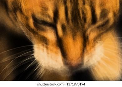 Ocicat cat daydream