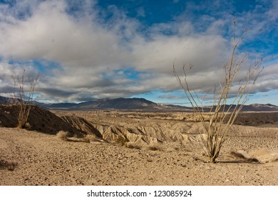 Ocotillo and badlands in Anza-Borrego Desert State Park