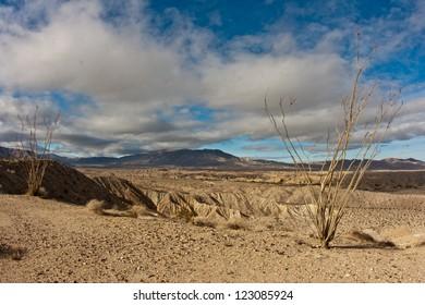 Ocotillo and badlands in Anza-Borrego Desert State Park