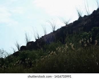 Ocotillo cactus against a blue sky
