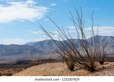 Ocotillo plant in the foreground of a mountain desert landscape in California.