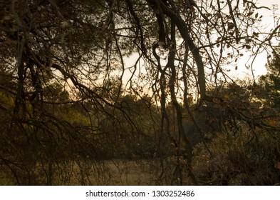 ocre mediterranean woods
