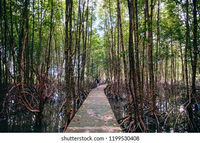 OCT 3, 2018 Trat, Thailand - Muslim woman on nature trail in Thailand tropical mangrove swamp forest with exotic tree and roots complex
