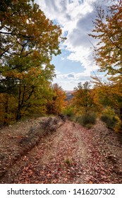 Oct. 30, 2016. Forest landscape in autumn, Romania. Landscape with colorful forest and blue sky. Rough roads or forest paths surrounded by orange autumnal forest.