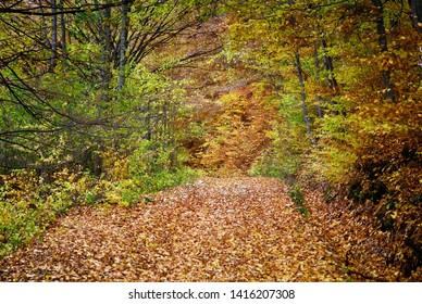 Oct. 30, 2016. Forest landscape in autumn, Romania. Landscape with colorful forest and blue sky. Rough roads or forest paths surrounded by forest and covered with colorful leaves.