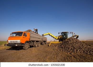 October 14, 2014. Ukraine. Kiev. A young Caucasian man works during the harvest in the field, loading sugar beet into a truck, using a loader, a sunny day and a blue sky