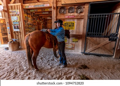OCTOBER 2017, Ridgway, Colorado: Cowboy prepares and grooms horse before Cattle Drive, San Juan Mountains, Colorado