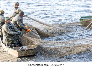 OCTOBER 30, 2016, POND VRKOC, IVAN, SOUTH MORAVIA, CZECH REPUBLIC: Fishermen on boats and ashore catch fish, using fishing net