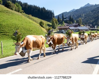 October 4, 2016 - Berner Oberland, Switzerland: transhumance with traditional dresses with cows decorated with flowers and bells.