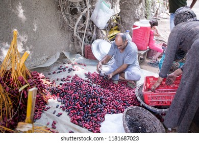 October 8, 2019-Cairo, Egypt: A seller selling red dates at his dates farm