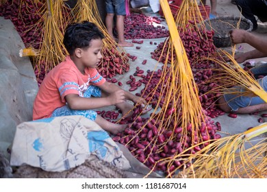 October 8, 2019-Cairo, Egypt: A young child helping his family selling red dates at a dates farm