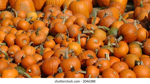 October Pumpkin Patch ready for Halloween