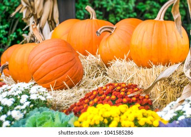 October/21/2017: East Rutherford, New Jersey: Pumpkins