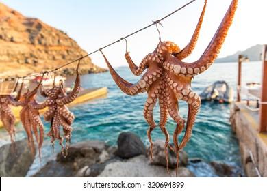 Octopus on Greek Island Santorini, harbor of Oia