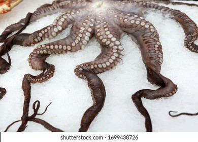 Octopus on snowy counter in a store