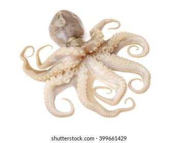 Octopus on white background