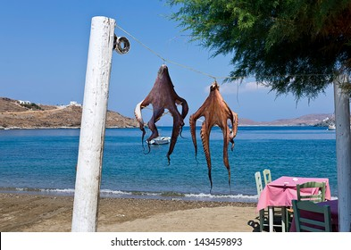 Octopuses drying at the sun, at a seaside tavern, Kythnos island, Cyclades, Greece