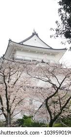 odawara kanagawa japan