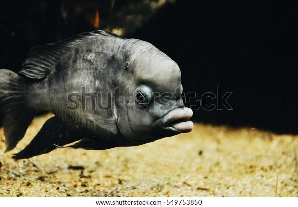 Big Weird Fish 9