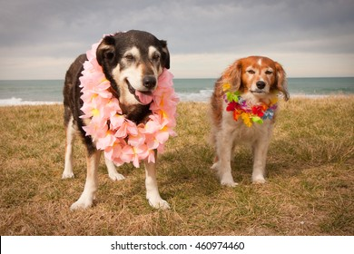 an odd couple - funny image of two dogs dressed up in costume Hawaiian lei at a beach