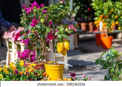 Odenplan flower market