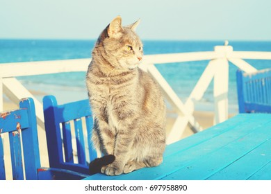 Odessa cats. Cute gray cat with sea view on the beach of Odessa city in Ukraine