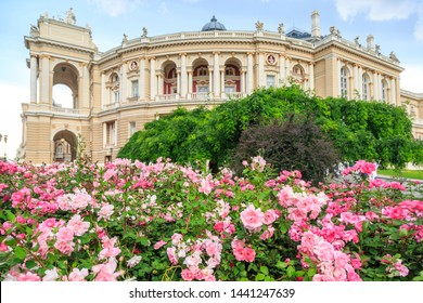 Odessa garden with pink roses with Odessa ballet and opera house in Odessa, Ukraine