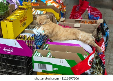 ODESSA, UKRAINE - CIRCA 2018: Fat red cat is sleeping sweetly in sun, lying on packages of expensive branded food for cats friskies and KiteKat. Red lazy cat sleeps in sun on summer day