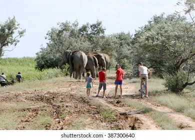 ODESSA, UKRAINE - JULY 10, 2008: Local children curiously watched the elephants walk on country roads.