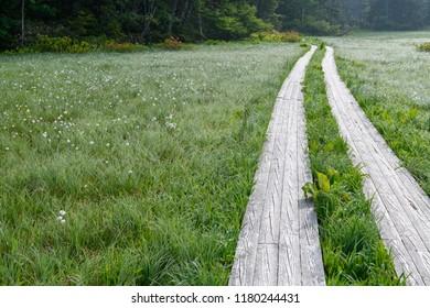 Oe Marsh in early summer