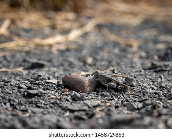Grasshopper Grey Images, Stock Photos & Vectors | Shutterstock