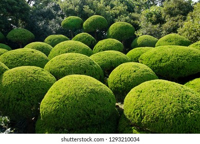 Oedo Botania garden in Oedo Island, South Korea
