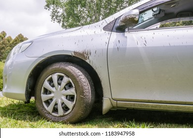 Off the beaten track: rental car dirty and splashed with mud after road trip exploring New Zealand, NZ