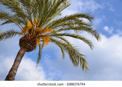 off center palm tree on partly clouded sky