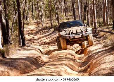 Off Road Four Wheel Drive in driving in a Eucalypt forest Australia