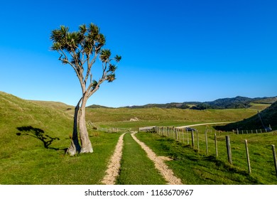 A off road track in the wilderness of New Zealand. There is a gravel track in the middle and a old lone tree. Blue sky and lush green grass made this image perfect for background and travel use.