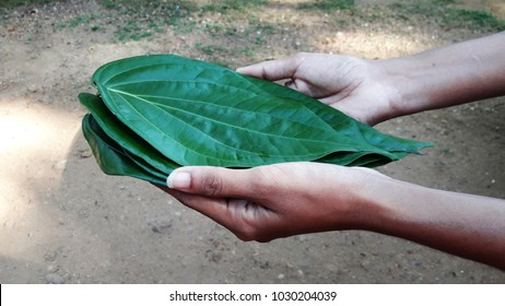 "Offering a sheaf of betel laves during new year. Traditional sri lankan custom. Betel leaves are one of the key players in Balinese offerings.""Sinhala Hindu Aluth Aurudda"""