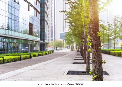 Office building courtyard with row of trees