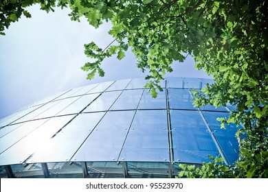 Office building and green oak, business concept