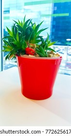 Office plant in red plastic pot