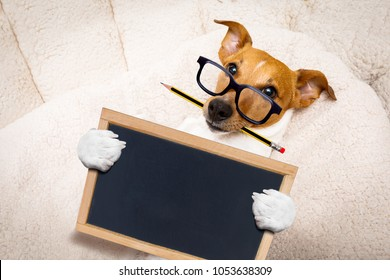 office worker businessman jack russell dog  as  boss and chef ,  with pencil or pen  in  mouth, holding banner or placard