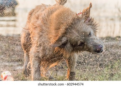 The official language of the dog or dogs (Canis lupus familiaris or scientific name Canis familiaris) is a mammal species in the family Canidae produce a multi-currency.