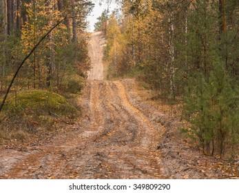Off-road. Polesie. Country Ukraine