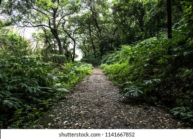 Offroad walking trail through a thick dense tropical rain forest of western ghats in goa region of India. Declared as one of the hottest biodiversity hot spot by unesco.