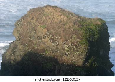 Offshore rock vegetation, Luffenholtz Beach County Park, Humboldt County, Trinidad, California, USA