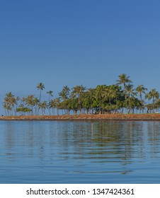 Offshore From Waikiki Coconut Palm Trees.  Calm blue ocean and sky with golden green palm trees.