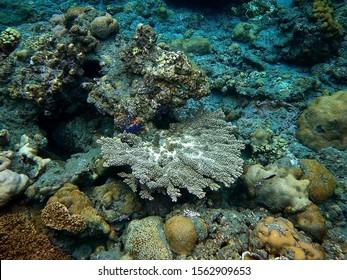 Ogasawara Islands Snorkeling, Japan. Beautiful texture of the coral reefs.